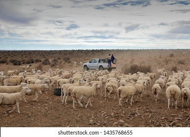 The Karoo in South Africa is a semi-desert sheep farming area which is very dry and  barren. Droughts are part of farming there. The farmer has just arrived with the maize to feed his sheep