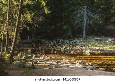 Karpach mountains and forest. Autumn forest, river.