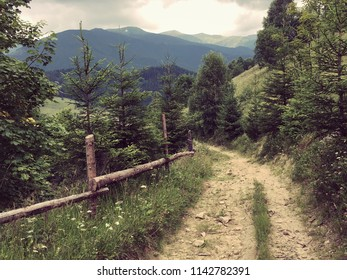 Karpaty is picturesque place mountains in Ukraine, and green grass around with blue sky