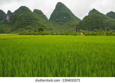 Karst mountain landscape in Yangshuo China at summer