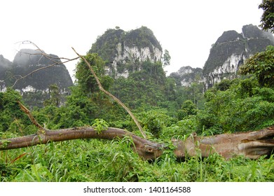Karst Mountains in the rural area and the green environment with the foreground of a dead tree
