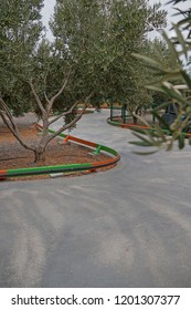 Karting track among olive trees.
