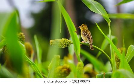Karur Images, Stock Photos & Vectors | Shutterstock