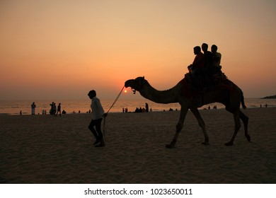 KASARGOD, INDIA -JAN 01 : Silhouettes of people take camel rides in the Bekal beach during sunset on January 01, 2018 in Kasargod, Kerala, India