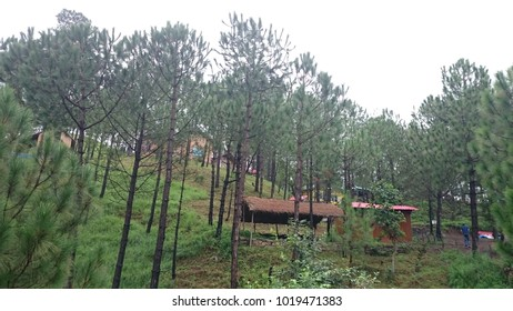 Kasauli Adventure Camp