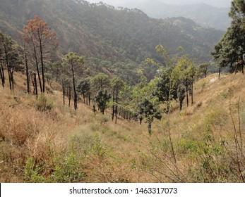 kasauli hills in spring season