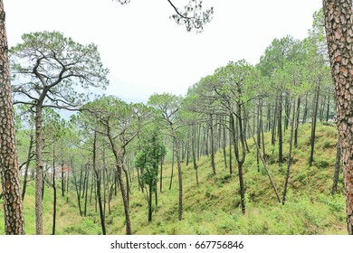 Kasauli - a small hill station in Himachal Pradesh. Snow-clad mountains, dense forests and a pleasant climate make Kasauli a major attraction among tourist.