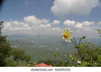 Kasauli,Himachal Pradesh/India, Aug.2,2015,Lonely flower at hill