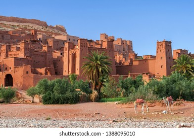 The Kasbahs of Ait Ben Haddou in the south of Morocco, Africa. / The Kasbahs of Ait Ben Haddou in the front are two Camels