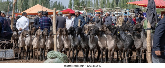 Kashgar, Xinjiang, China - September 16, 2018 :  Panorama of buyers and sellers haggling over sheep at the Sunday Livestock Bazaar and Market in Kashgar, or Kashi, China.