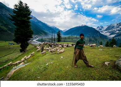 Kashmir, India -June 30: Unidentified man with a sheeps standing on Sonamarg mountain on June 30, 2014. There are people of Kashmir who live on the mountain to feed the animals.