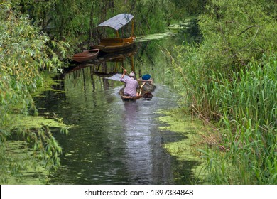 Kashmiri men with old wooden boat rowing collect alga or seaweed for agriculture on Dal Lake daily early morning in Kashmir, Srinagar, India