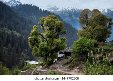 Kasol, a village in Himachal Pradesh, India