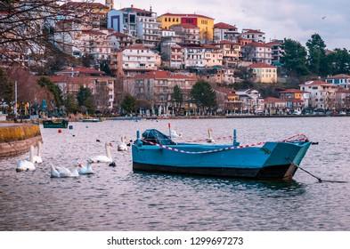 Kastoria Greece December 31 2018-Swans swimming on the Orestiada lake in Kastoria.