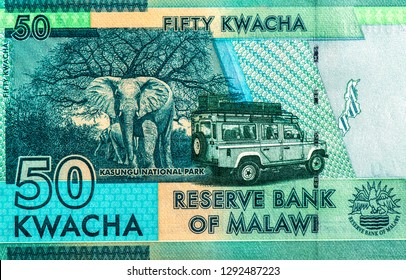 Kasungu National Park  from 50 Malawi kwacha bank note. Malawi kwacha is the national currency in Malawi. Close Up UNC Uncirculated - Collection