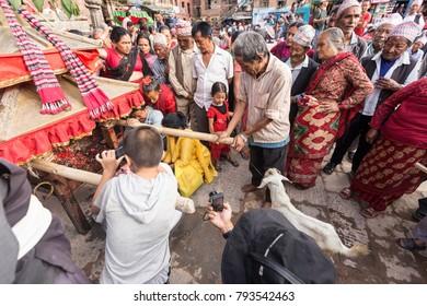 Kathmandu, Nepal - August 14, 2017 : Goat is waiting to be sacrificed at Durbar Square during the Indra Jatra festival in Kathmandu city