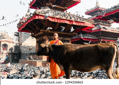 Kathmandu, Nepal - December 9, 2018: A monk at Kathmandu Durbar Square surrounded by birds and cow.