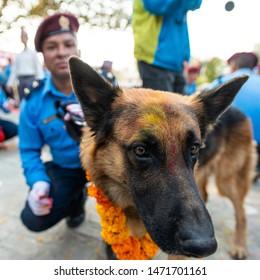 KATHMANDU, NEPAL - NOVEMBER 6, 2018: Nepal police celebrates Kukur Tihar (dog festival) at Central Police Dog Training School.