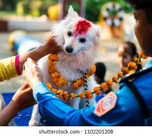 KATHMANDU, NEPAL - OCTOBER 29, 2016: Nepal police celebrates Kukur Tihar (dog festival) at Central Police Dog Training School.