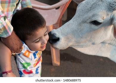 Katni / India 10 August 2019 Dairy cow kissing a indian boy at Katni Madhya Pradesh India