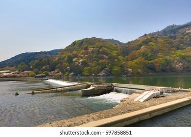 Katsura River at spring time