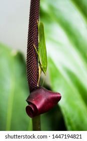 Katydid in my house pretend to be leaf
