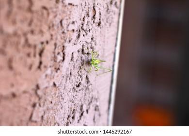 a katydid on a stucco wall