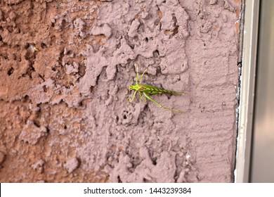 a katydid on a stucco wall 9034