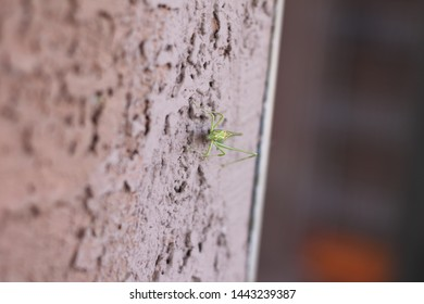 a katydid on a stucco wall 9045