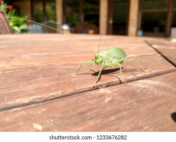 Katydid in the sunlight