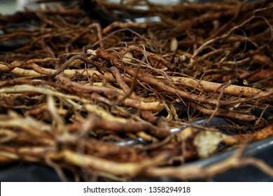Kava Kava roots selective focus for background - Shutterstock ID 1358294918