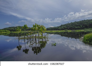 Kaw Marsh, Marais de Kaw, forested hills in background under a moody sky at sunset, French Guiana, France