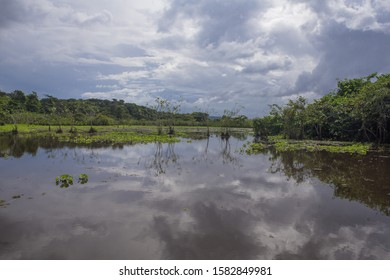 Kaw Marsh, Marais de Kaw, forested hill-ridge in background under a moody sky at sunset, French Guiana, France