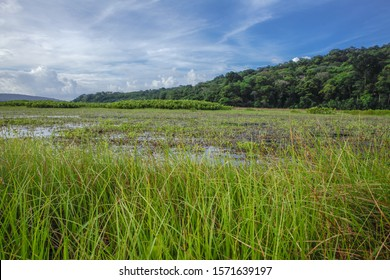 Kaw Marsh, Marais de Kaw, with marsh vegetation, forested ridges in background, under a cloudy sky at sunset, French Guiana, France