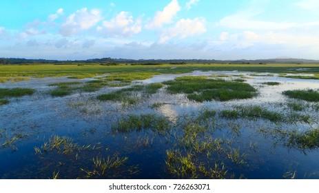 kaw swamp