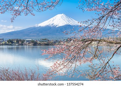 KAWAGUCHI, JAPAN - APR 13: Cherry blossom festival at lake Kawaguchi, April 13, 2013 in Japan. Viewing cherry blossom is a traditional Japanese custom. Kawaguchi is one of the best place to enjoy it