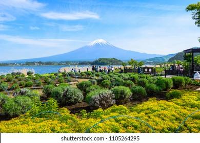 KAWAGUCHIKO, YAMANASHI JAPAN - MAY 12: Tourists enjoying mount Fuji view from Oishi park at the Lake Kawaguchiko northern coast, Yamanashi Japan