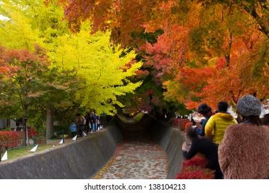 KAWAKUCHIGO - NOV 10: Tourists visit maple corridor in Kawakuchigo area, Japan on Nov 11,2012 . Kawaguchiko is the most famous place to view Mt.Fuji especially in Autumn and Cherry Blossom season.