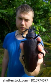 Kaw/French Guiana - 27.01.2015: A male scientist compared to the largest beetle in the world, Titanus giganteus! Body length of the specimen he is holding is about 16 centimeters.