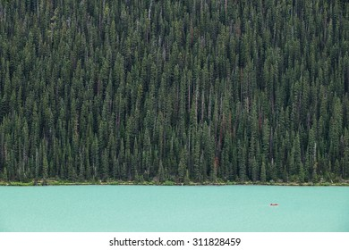 Kayakers on Lake Louise backdropped by a forest of giant fir trees in Banff National Park, Canada.