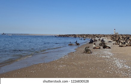 Kayaking with wild seals in Walvis Bay, Skeleton Coast, Namibia
