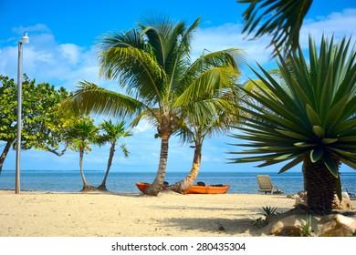 kayaks under cocnut palms on a beach
