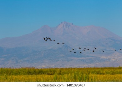 KAYSERI- TURKEY- 10,08, 2019: There are 301 different bird species in the Sultan Reeds in Kayseri. The National Park, declared Ramsar area in 2006, attracts local and foreign nature lovers.
