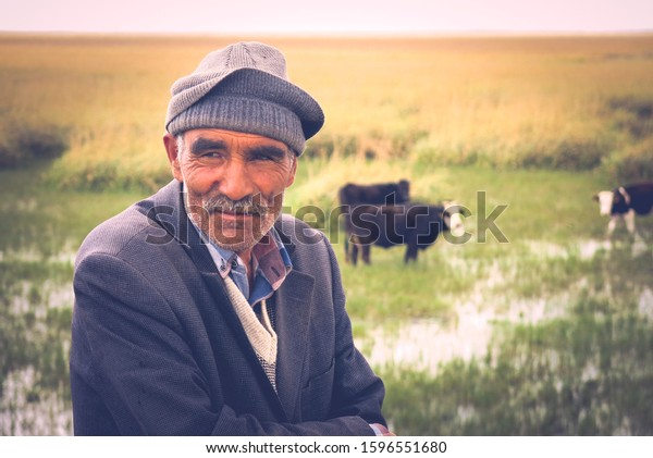 Kayseri, Turkey - December 2 2019: Old villager or shepherd is looking stressed while the cows are grazing in the background on the field. Farmer and his animals. Shepherd with cows on the field.