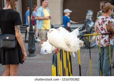 Kazan, Republic of Tatarstan, Russia - July 19, 2019. Bauman street, pedestrian street, favorite place for tourists and visitors to walk. white pigeons