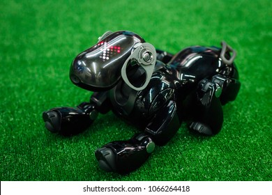 """Kazan, Russia - March2018. Japanese robot dog Aibo of black color lies on a green artificial lawn with a  plastic toy, at the exhibition """"City of Robots"""""""