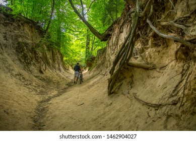 """Kazimierz Dolny - July 06, 2019 """"Roots Gorge"""" in Kazimierz Dolny. Amazing gorge with trees, roots of old trees and shrubs, exposed as a result of soil erosion, near Lublin, Poland."""