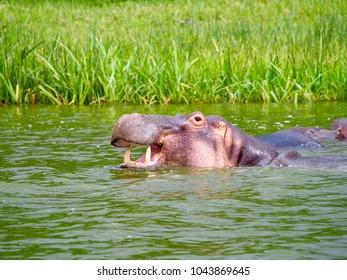 Kazinga Channel, Queen Elizabeth National Park, Uganda