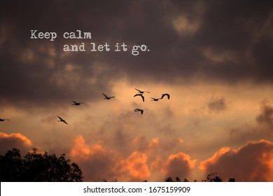 Keep calm  and let it go with bird flying during sunset