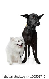Keeshond (Dutch Barge Dog) and a black Shepherd mix in front of a white background